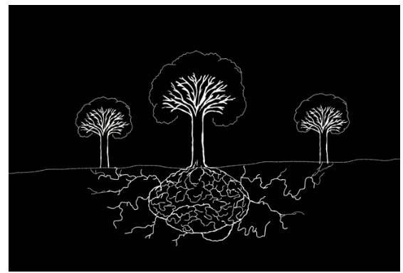 Mother trees and underground networks