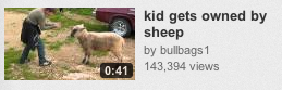 Kid gets owned by sheep